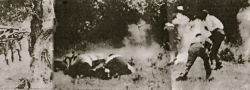 1941. Retribution by the Germans was swift and merciless. Here, Cretans are rounded up and executed.