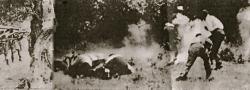 1941. Die Vergeltung der Deutschen war schnell und gnadenlos. Hier, sind Kreter umzingelt und hingerichtet worden.